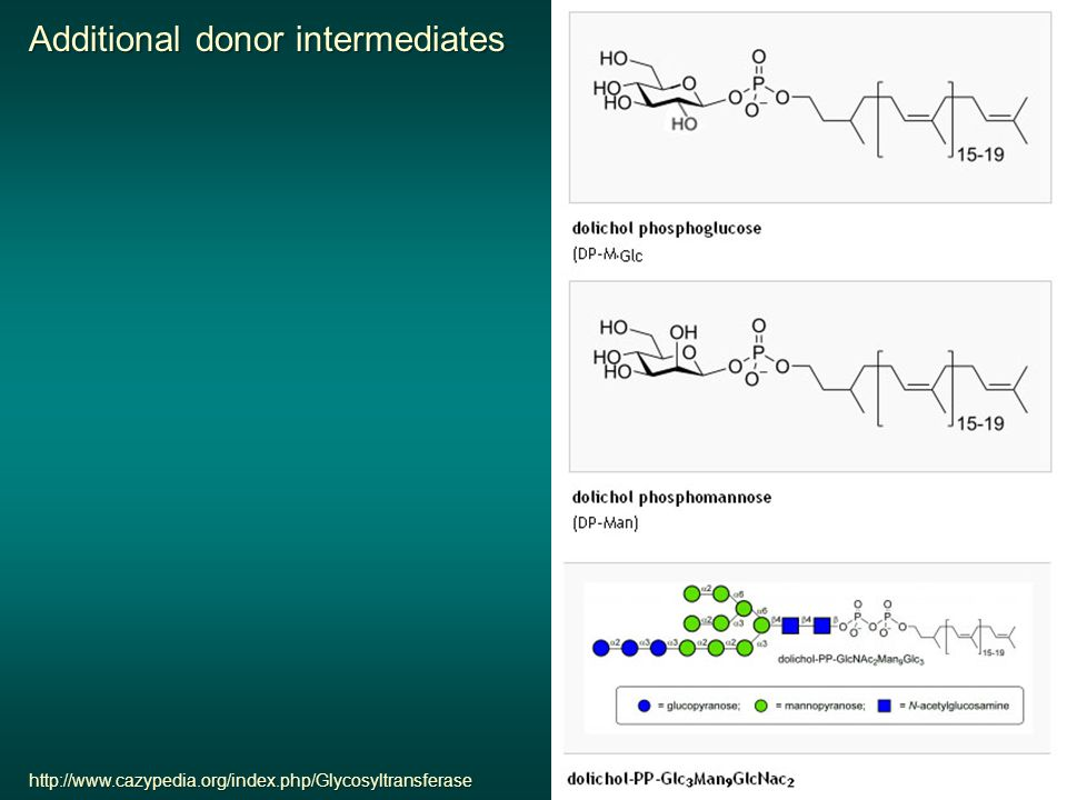 http://www.cazypedia.org/index.php/Glycosyltransferase Additional donor intermediates