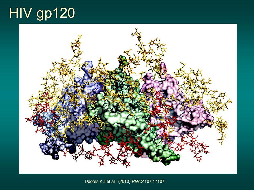 HIV gp120 HIV gp120 HIV gp120 HIV gp120 Doores K J et al. (2010) PNAS 107:17107