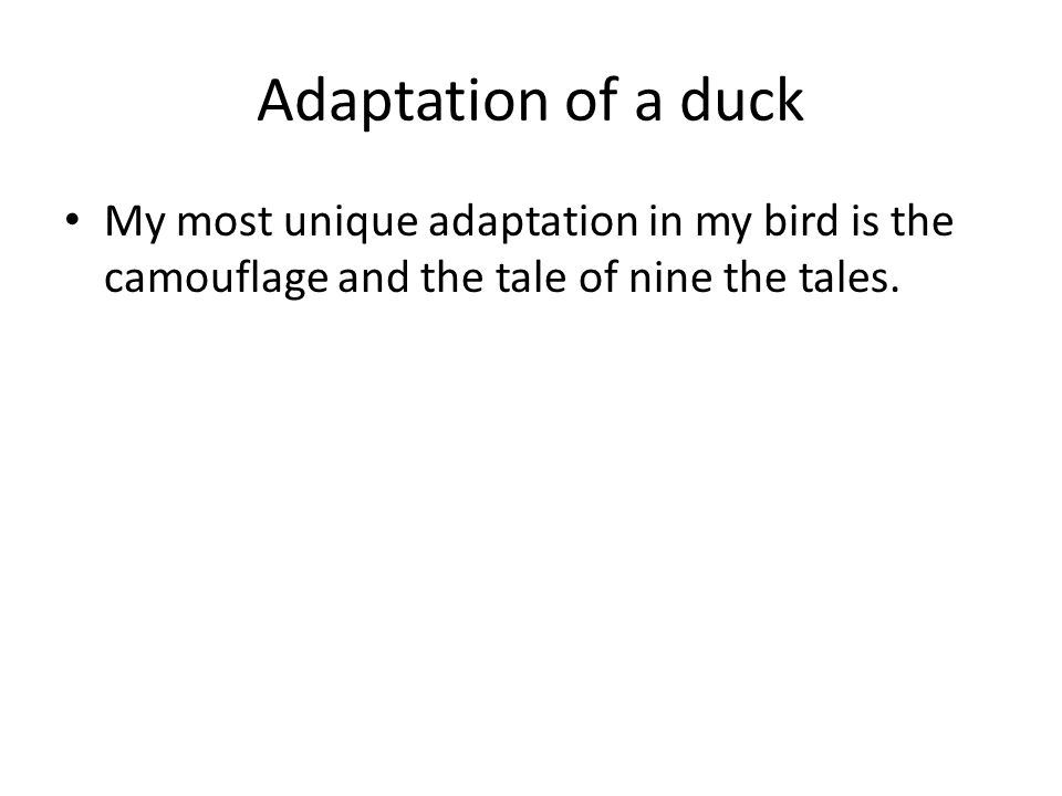 Adaptation of a duck My most unique adaptation in my bird is the camouflage and the tale of nine the tales.