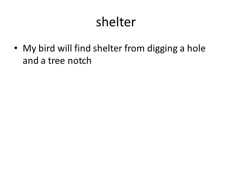 shelter My bird will find shelter from digging a hole and a tree notch