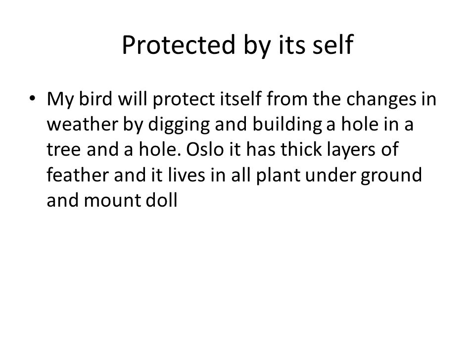 Protected by its self My bird will protect itself from the changes in weather by digging and building a hole in a tree and a hole. Oslo it has thick l