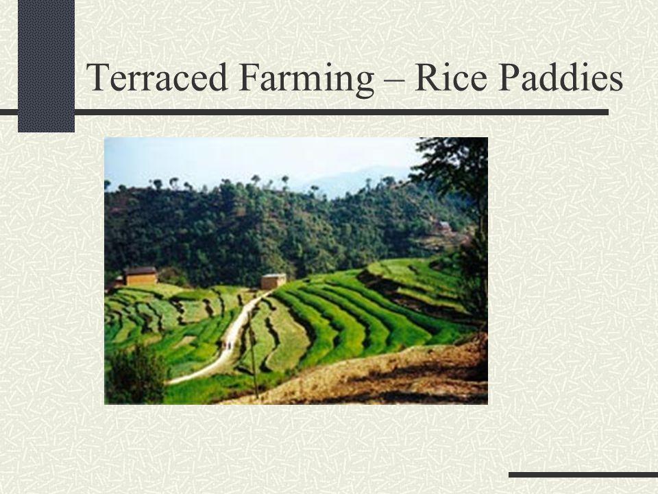 Terraced Farming – Rice Paddies
