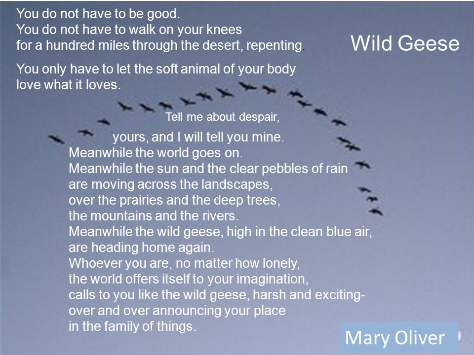 Wild Geese Mary Oliver yours, and I will tell you mine.