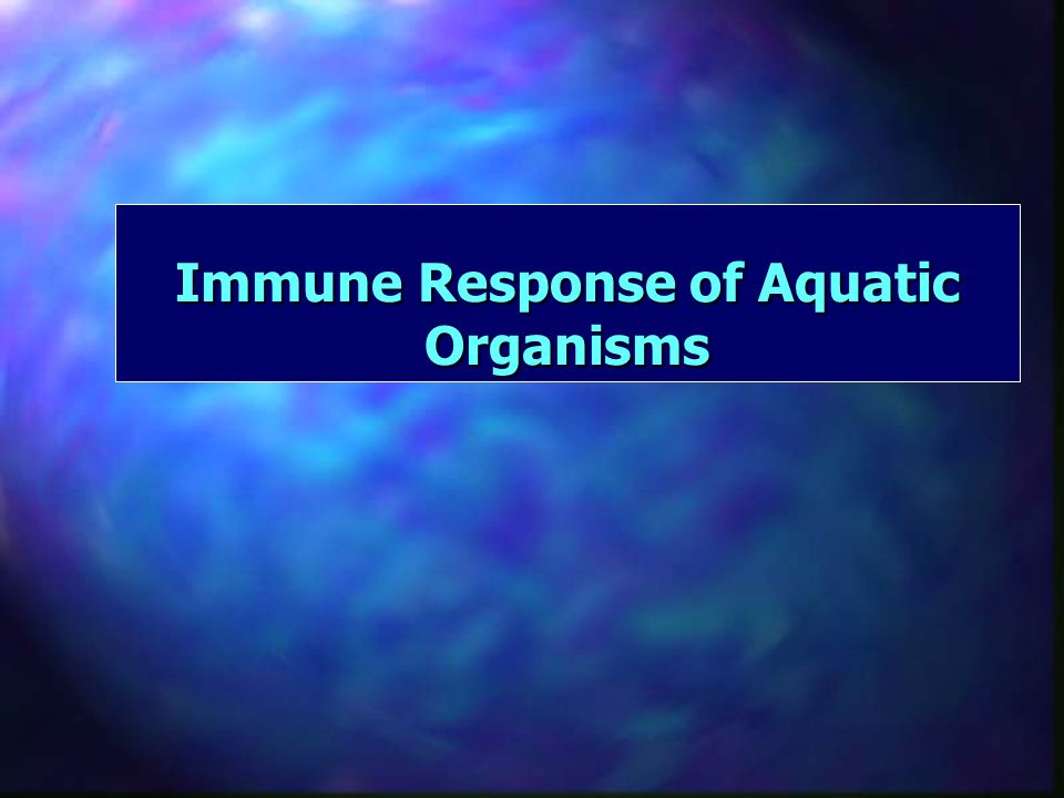 Immune Response Sequence: 6 Finally, as the infection is brought under control, yet another type of T cell, the suppressor T cell, tells B cells, helper T's and killer T's to turn off Most immune cells die, but a few remain in the body, called memory cells They will be able to respond more quickly the next time the body is invaded by the same foreign substance