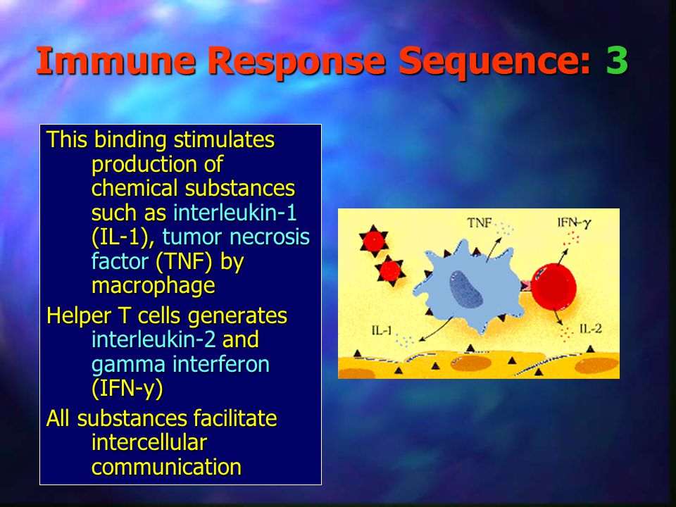 Immune Response Sequence: 3 This binding stimulates production of chemical substances such as interleukin-1 (IL-1), tumor necrosis factor (TNF) by mac