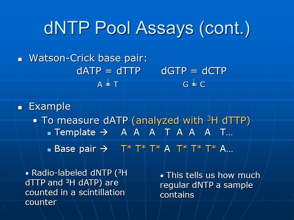 dNTP Pool Assays (cont.) Watson-Crick base pair: Watson-Crick base pair: dATP = dTTP dGTP = dCTP A = T G = C A = T G = C Example Example To measure dATP (analyzed with 3 H dTTP)To measure dATP (analyzed with 3 H dTTP) Template  A A A T A A A T… Template  A A A T A A A T… Radio-labeled dNTP ( 3 H dTTP and 3 H dATP) are counted in a scintillation counter Radio-labeled dNTP ( 3 H dTTP and 3 H dATP) are counted in a scintillation counter This tells us how much regular dNTP a sample contains This tells us how much regular dNTP a sample contains Base pair  T* T* T* A T* T* T* A… Base pair  T* T* T* A T* T* T* A…