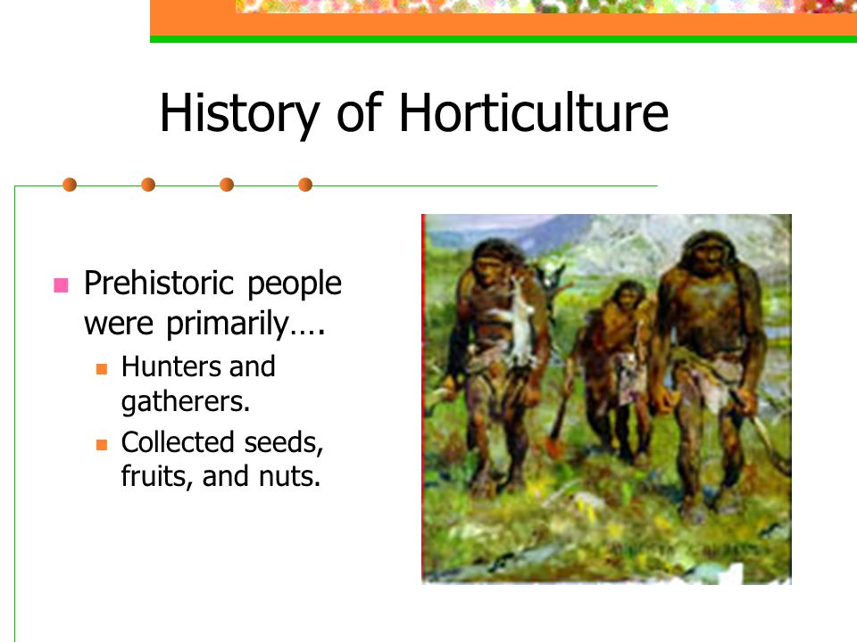 History of Horticulture Prehistoric people were primarily…. Hunters and gatherers. Collected seeds, fruits, and nuts.