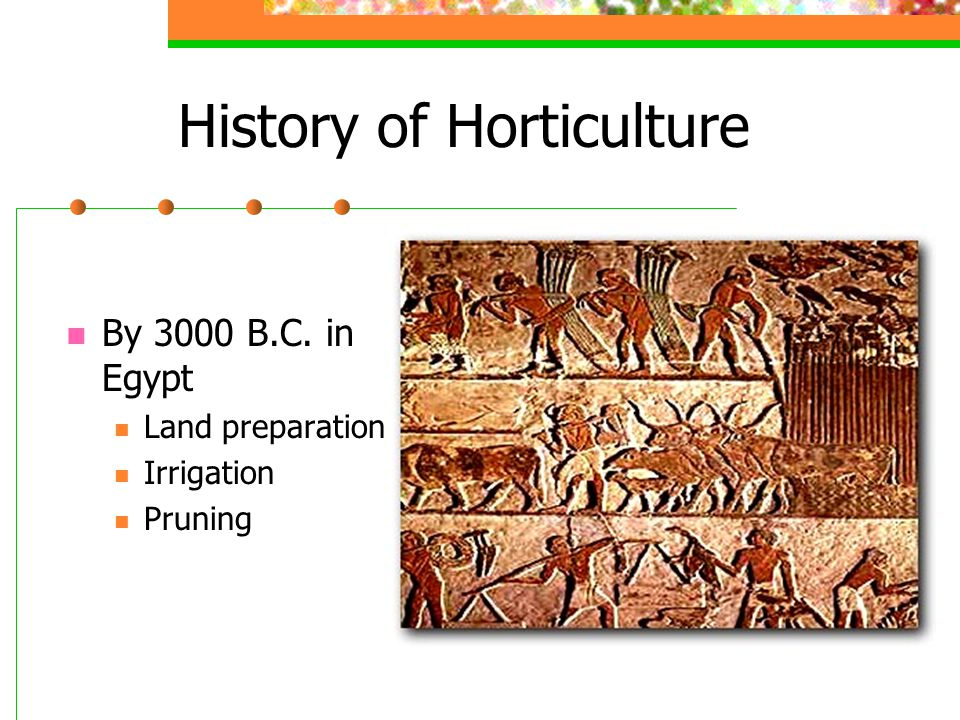 History of Horticulture By 3000 B.C. in Egypt Land preparation Irrigation Pruning