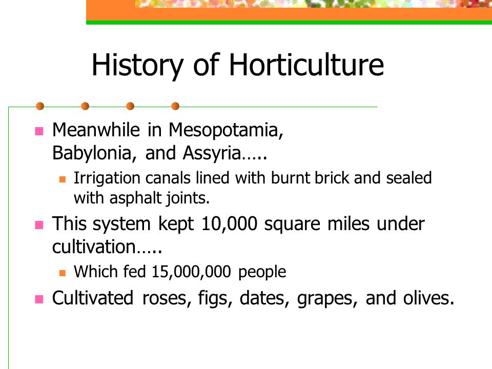 History of Horticulture Meanwhile in Mesopotamia, Babylonia, and Assyria….. Irrigation canals lined with burnt brick and sealed with asphalt joints. T