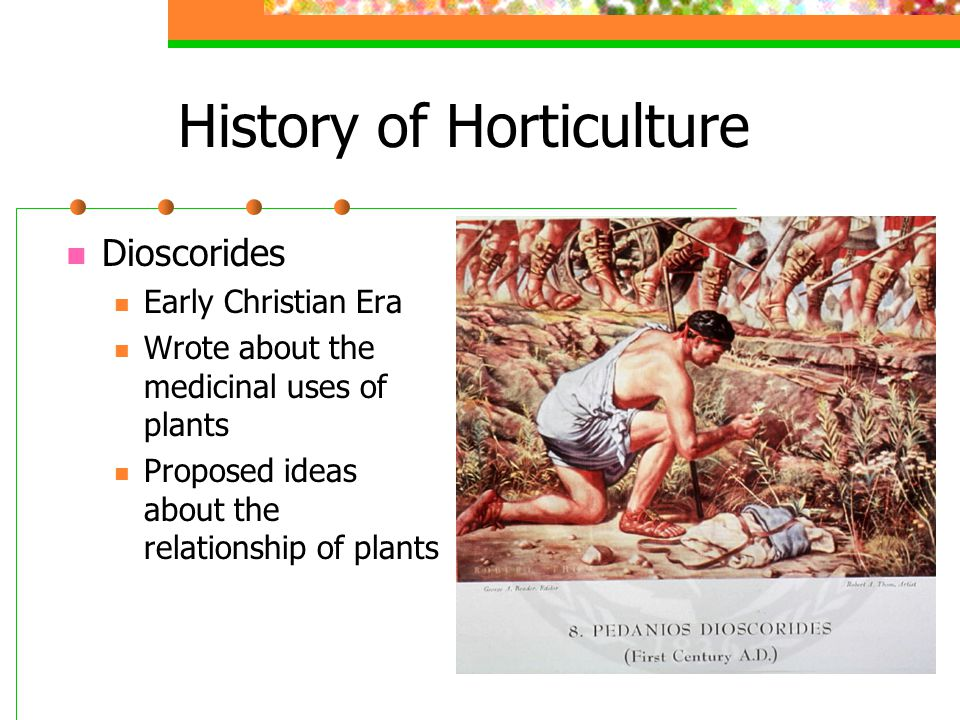 History of Horticulture Dioscorides Early Christian Era Wrote about the medicinal uses of plants Proposed ideas about the relationship of plants
