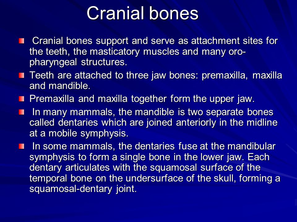 Cranial bones Cranial bones support and serve as attachment sites for the teeth, the masticatory muscles and many oro- pharyngeal structures. Cranial