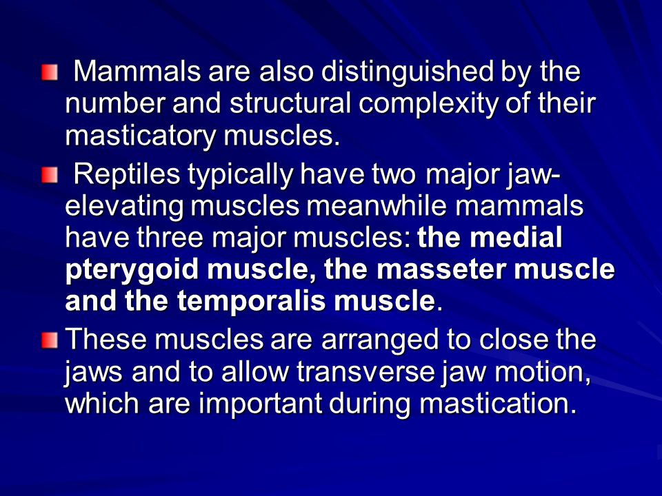 Mammals are also distinguished by the number and structural complexity of their masticatory muscles. Mammals are also distinguished by the number and