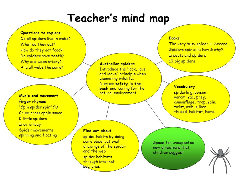 Teacher's mind map Australian spiders Introduce the look, love and leave principle when examining wildlife.