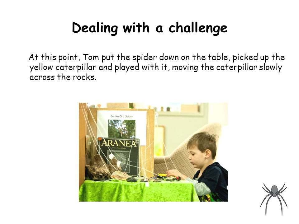 Dealing with a challenge At this point, Tom put the spider down on the table, picked up the yellow caterpillar and played with it, moving the caterpillar slowly across the rocks.