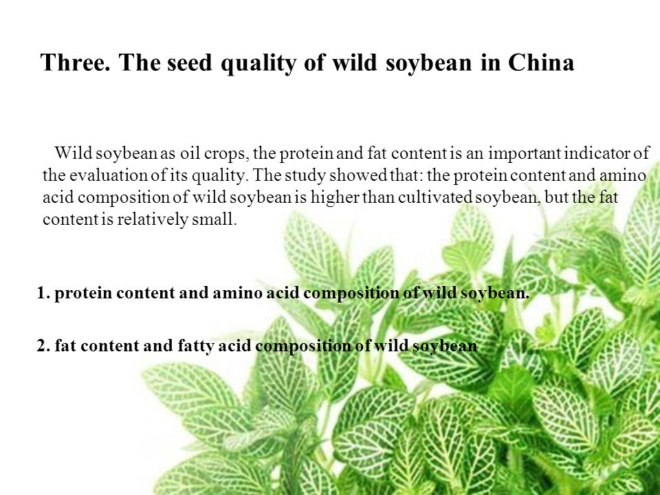 Three. The seed quality of wild soybean in China Wild soybean as oil crops, the protein and fat content is an important indicator of the evaluation of
