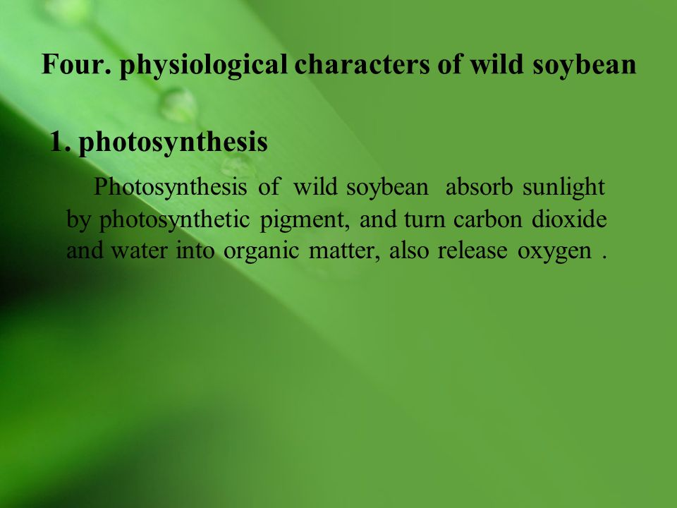 Four. physiological characters of wild soybean 1. photosynthesis Photosynthesis of wild soybean absorb sunlight by photosynthetic pigment, and turn ca