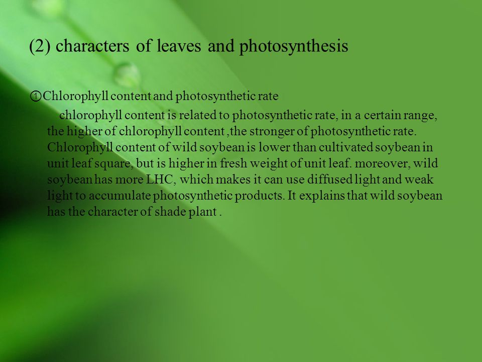 (2) characters of leaves and photosynthesis ① Chlorophyll content and photosynthetic rate chlorophyll content is related to photosynthetic rate, in a certain range, the higher of chlorophyll content,the stronger of photosynthetic rate.