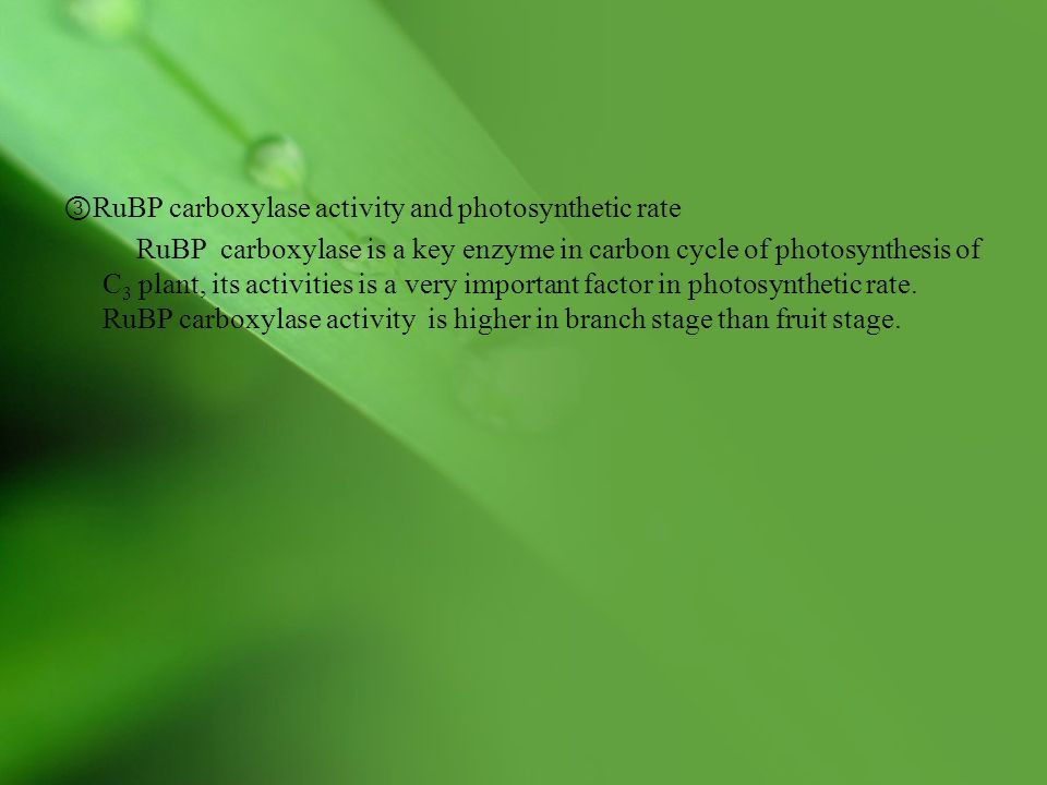 ③ RuBP carboxylase activity and photosynthetic rate RuBP carboxylase is a key enzyme in carbon cycle of photosynthesis of C 3 plant, its activities is a very important factor in photosynthetic rate.