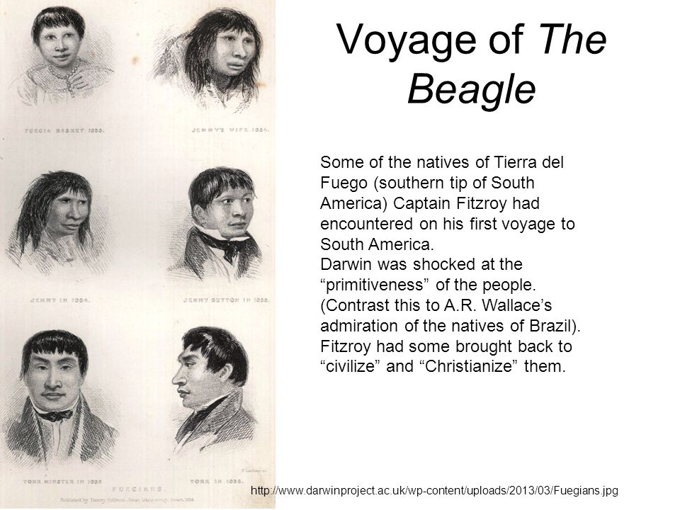 Voyage of The Beagle Some of the natives of Tierra del Fuego (southern tip of South America) Captain Fitzroy had encountered on his first voyage to South America.
