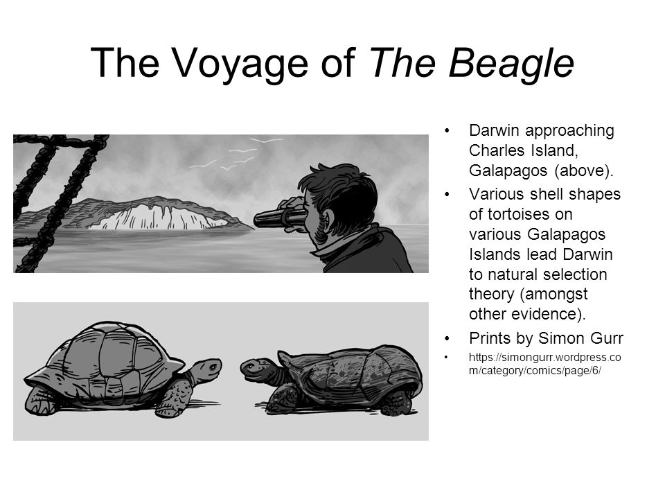 The Voyage of The Beagle Darwin approaching Charles Island, Galapagos (above).