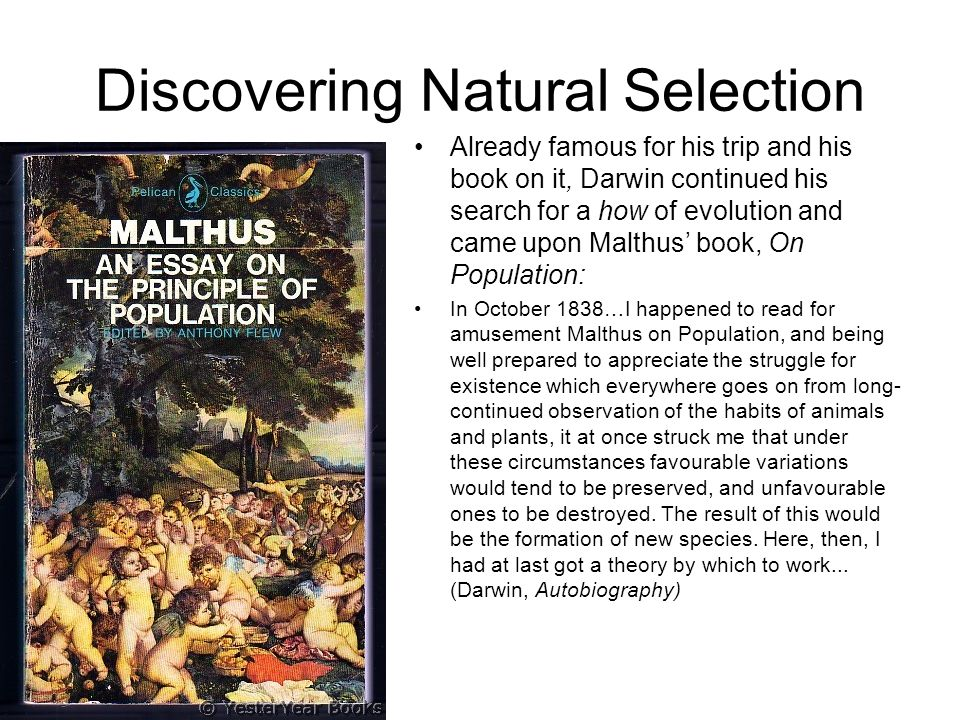 Discovering Natural Selection Already famous for his trip and his book on it, Darwin continued his search for a how of evolution and came upon Malthus' book, On Population: In October 1838…I happened to read for amusement Malthus on Population, and being well prepared to appreciate the struggle for existence which everywhere goes on from long- continued observation of the habits of animals and plants, it at once struck me that under these circumstances favourable variations would tend to be preserved, and unfavourable ones to be destroyed.