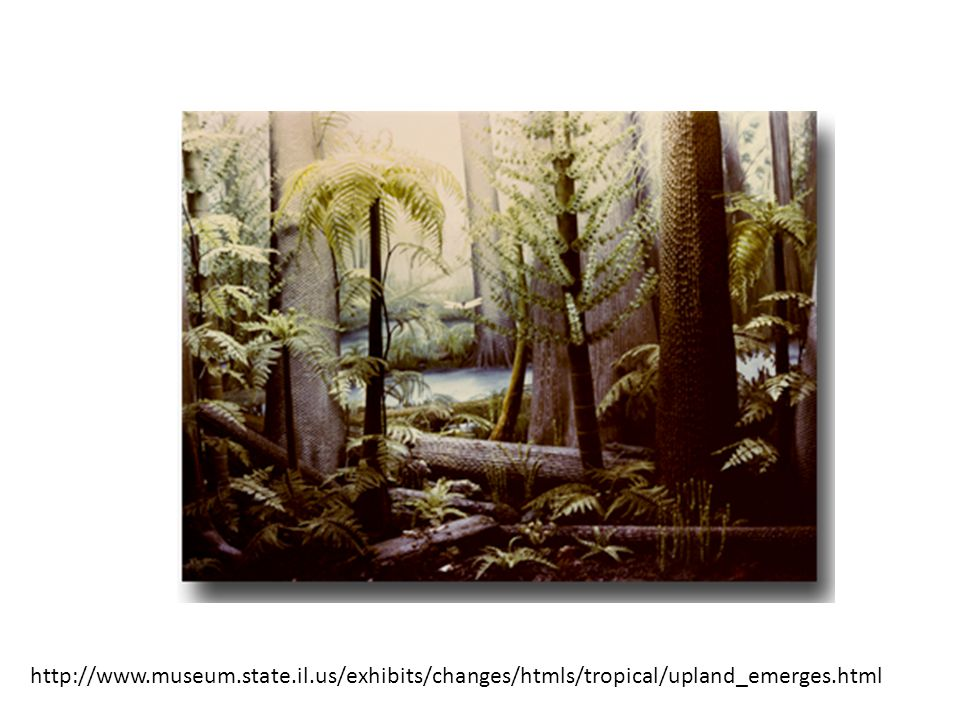 http://www.museum.state.il.us/exhibits/changes/htmls/tropical/upland_emerges.html