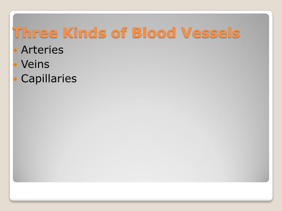 Three Kinds of Blood Vessels Arteries Veins Capillaries