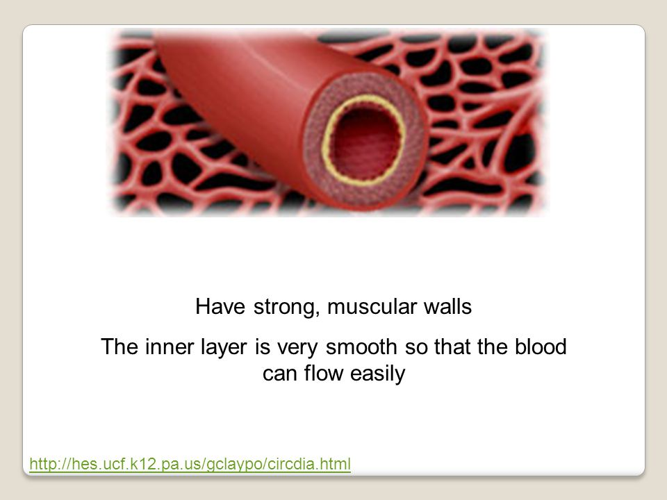 http://hes.ucf.k12.pa.us/gclaypo/circdia.html Have strong, muscular walls The inner layer is very smooth so that the blood can flow easily