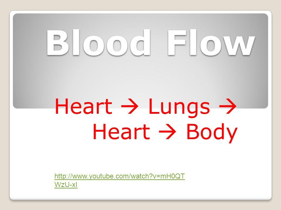 Blood Flow Heart  Lungs  Heart  Body http://www.youtube.com/watch?v=mH0QT WzU-xI