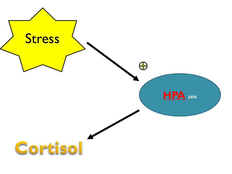 Stress HPA axis