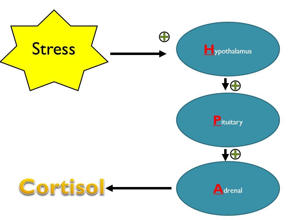 H ypothalamus P ituitary A drenal Stress