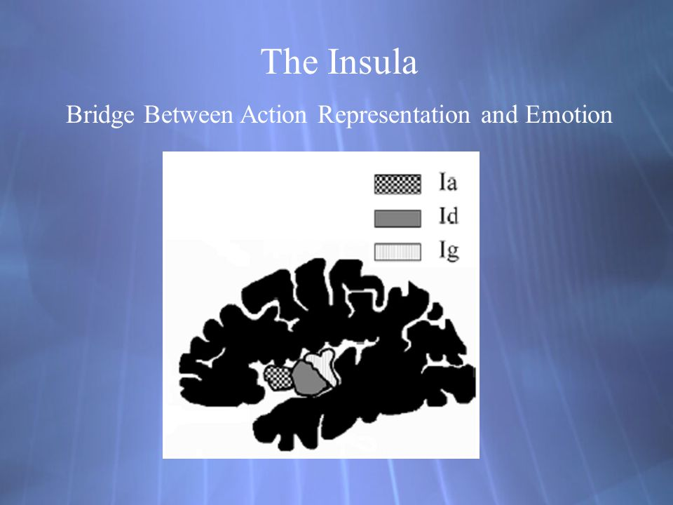 The Insula Bridge Between Action Representation and Emotion