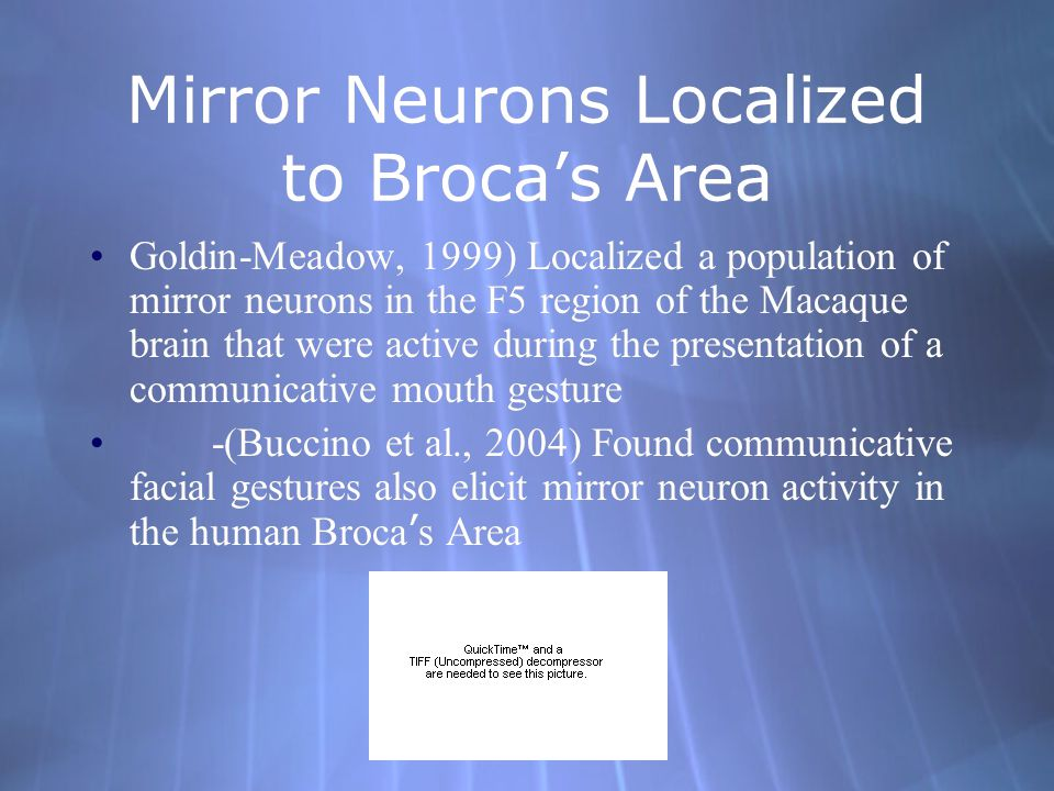 Mirror Neurons Involved in Language Processing in Motor Cortex -(Hauk, 2004) with fMRI, found that when subjects would read passages concerning various body features(face, hands etc.) there would be corresponding activity in the related motor cortex regions.