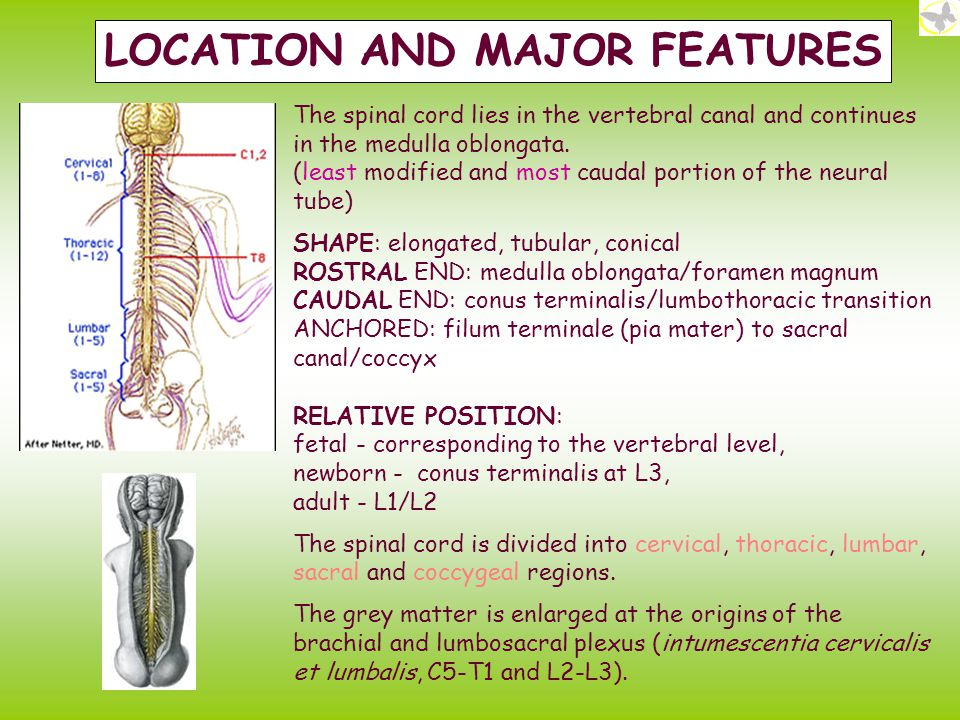 CLINICAL RELEVANCES WHAT MAY DAMAGE THE SPINAL CORD.