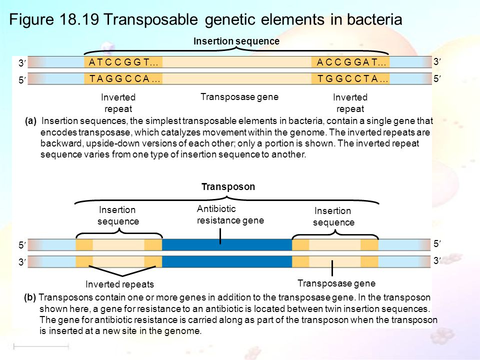 Figure 18.19 Transposable genetic elements in bacteria (a) Insertion sequences, the simplest transposable elements in bacteria, contain a single gene that encodes transposase, which catalyzes movement within the genome.