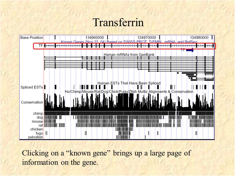 Clicking on a known gene brings up a large page of information on the gene. Transferrin
