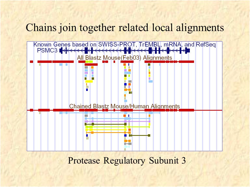 Chains join together related local alignments Protease Regulatory Subunit 3