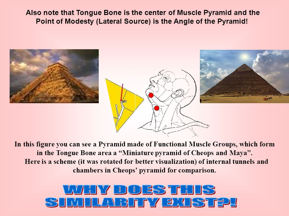 Also note that Tongue Bone is the center of Muscle Pyramid and the Point of Modesty (Lateral Source) is the Angle of the Pyramid.