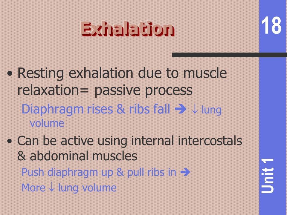 18 Unit 1 Resting exhalation due to muscle relaxation= passive process Diaphragm rises & ribs fall   lung volume Can be active using internal interc
