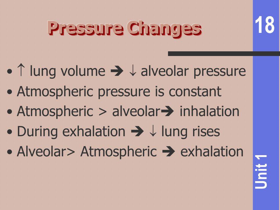 18 Unit 1  lung volume   alveolar pressure Atmospheric pressure is constant Atmospheric > alveolar  inhalation During exhalation   lung rises Al