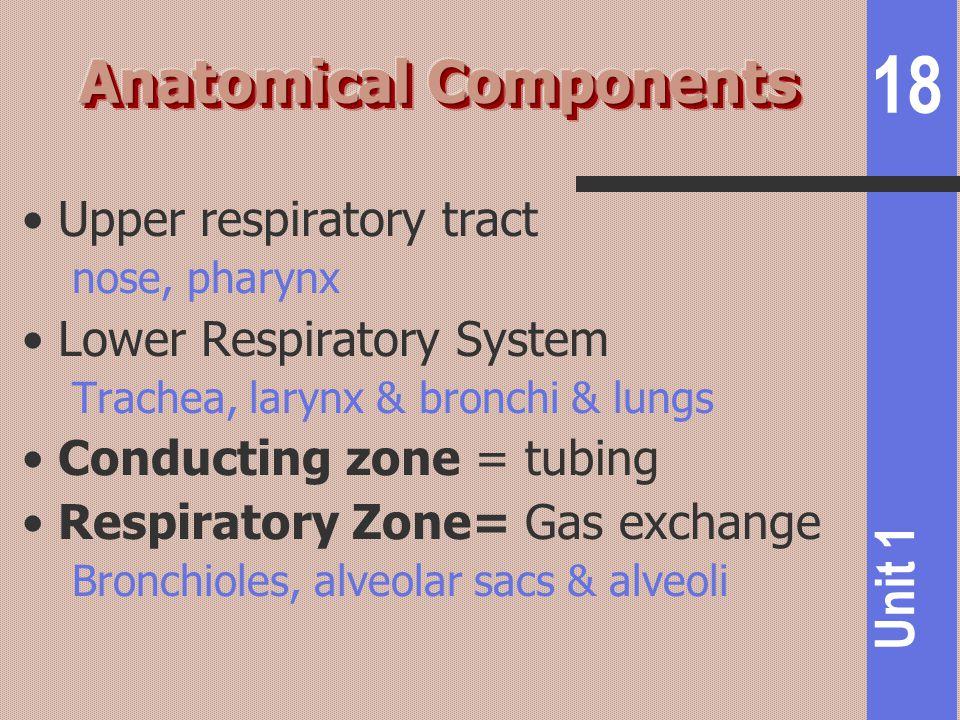 18 Unit 1 Upper respiratory tract nose, pharynx Lower Respiratory System Trachea, larynx & bronchi & lungs Conducting zone = tubing Respiratory Zone=