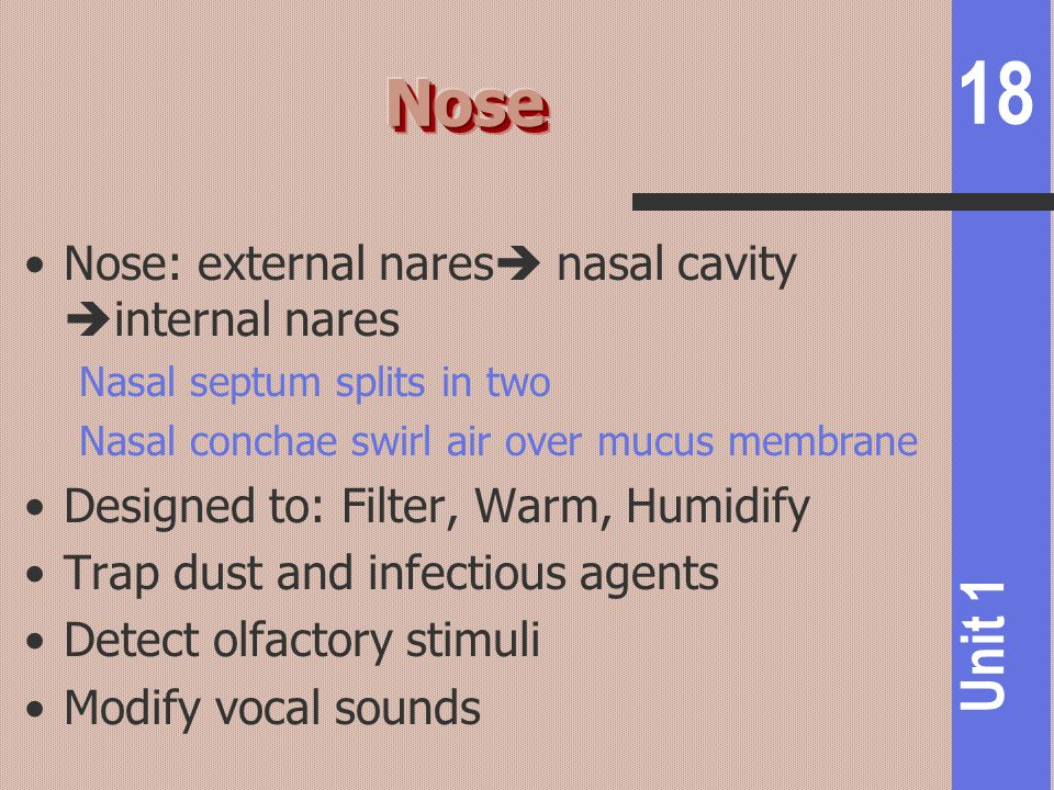 18 Unit 1 Nose: external nares  nasal cavity  internal nares Nasal septum splits in two Nasal conchae swirl air over mucus membrane Designed to: Fil