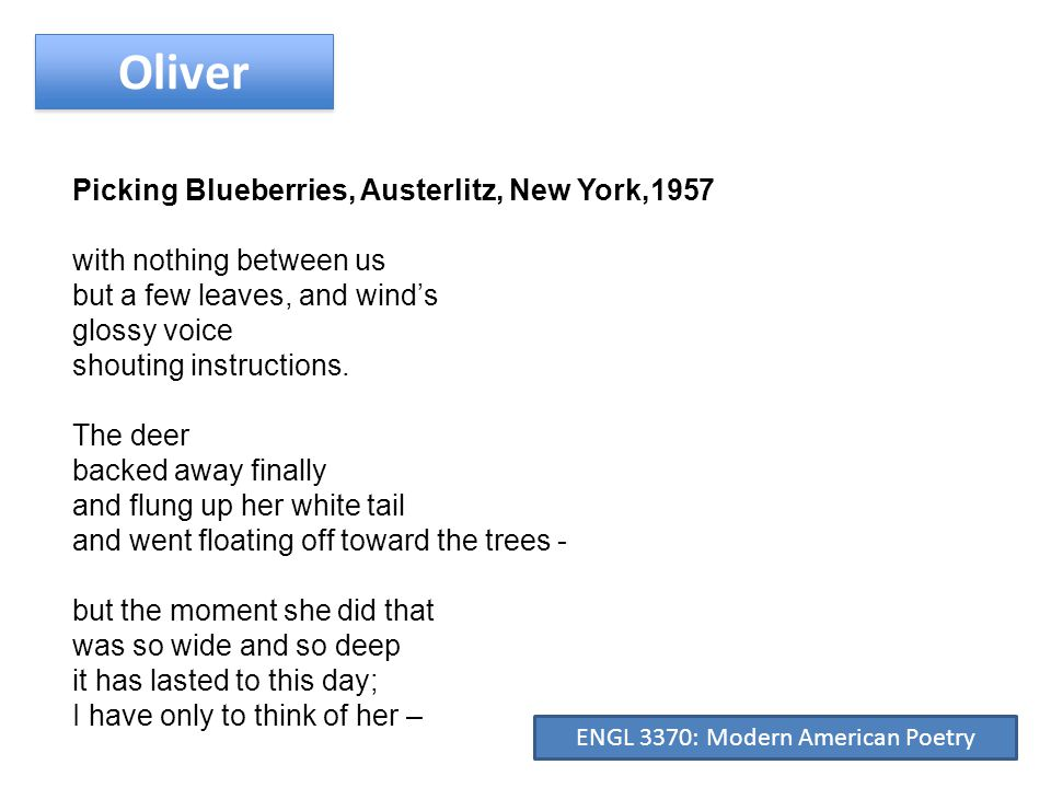 Oliver Picking Blueberries, Austerlitz, New York,1957 the flower of her amazement and the stalled breath of her curiosity, and even the damp touch of her solicitude before she took flight - to be absent again from this world and alive, again, in another for thirty years sleepy and amazed, rising out of the rough weeds listening and looking.