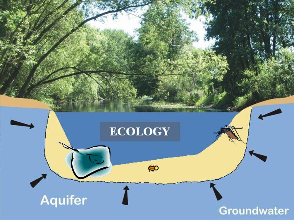FAUNAL HABITAT  A distinct habitat was detected and named the 'hyporheic biotope'.