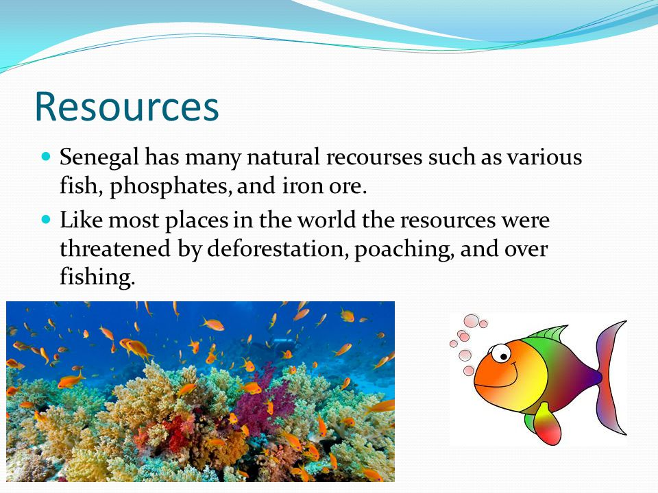 Resources Senegal has many natural recourses such as various fish, phosphates, and iron ore.