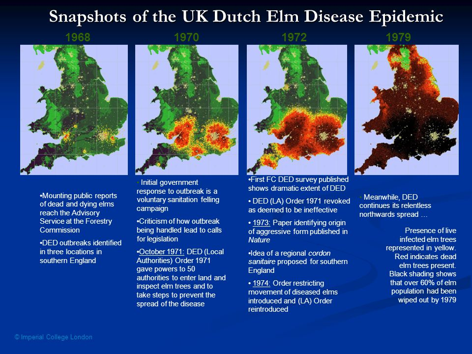 © Imperial College London Snapshots of the UK Dutch Elm Disease Epidemic 1968197019721979 Presence of live infected elm trees represented in yellow.