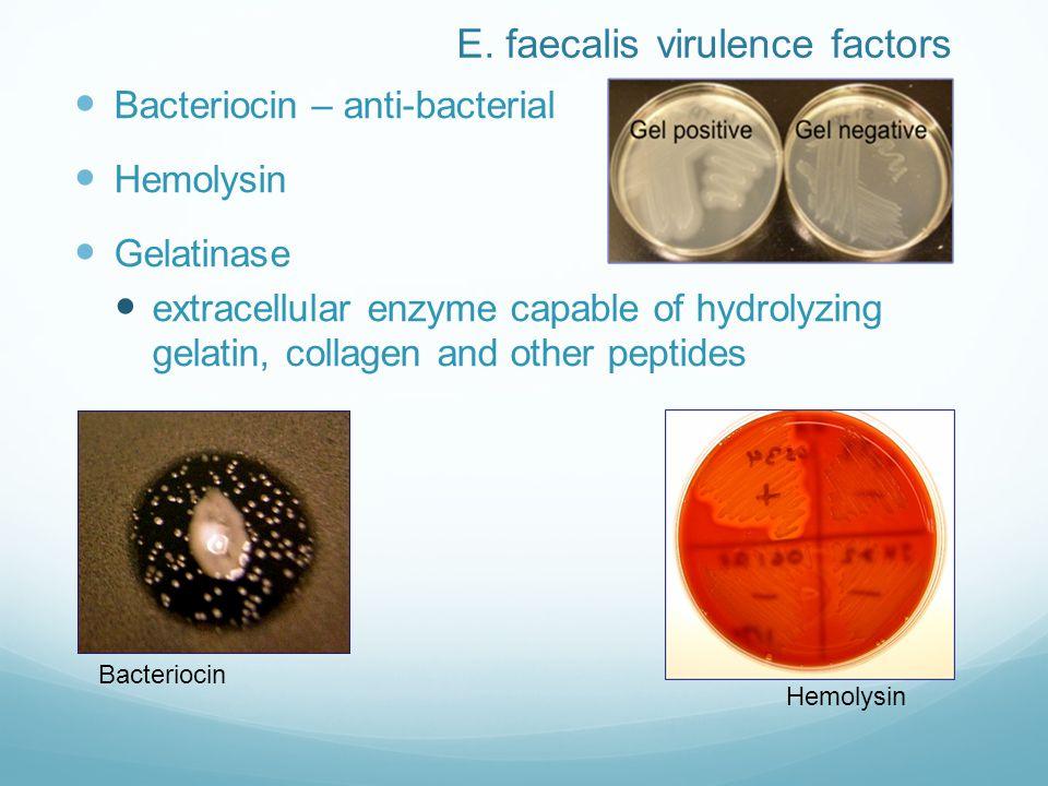 E. faecalis virulence factors Bacteriocin – anti-bacterial Hemolysin Gelatinase extracellular enzyme capable of hydrolyzing gelatin, collagen and othe