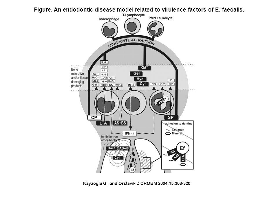 Figure. An endodontic disease model related to virulence factors of E.