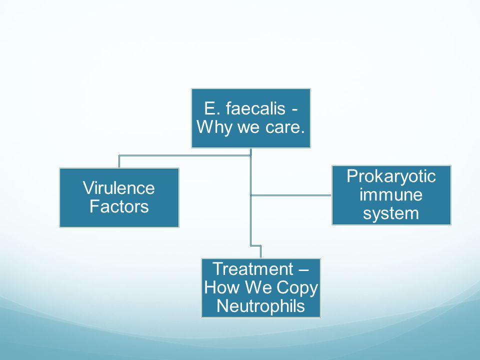 E. faecalis - Why we care.