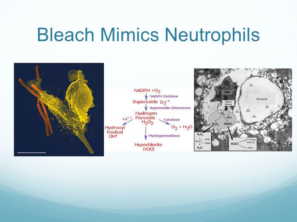 Bleach Mimics Neutrophils